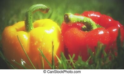 Slow motion shot of water splashes on red and yellow sweet peppers