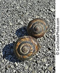 Slow motion - Two snails on the road do not whant to start...