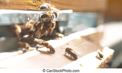 slow motion video. a swarm of bees flies into a hive collect...