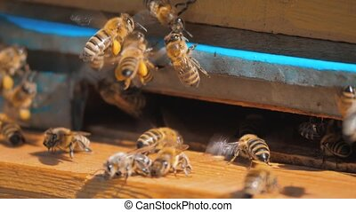 slow motion video apiary. a swarm of bees flies into a hive...