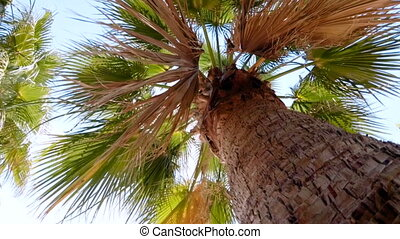 Slow motion video of palm tree aginst blue sky - Slow motion...