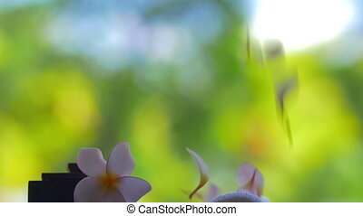 Slow motion view of falling petals of flowers against green...