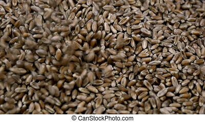Slow motion wheat grains fall close-up. Eco-friendly foods...