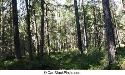 Slow penetration into virgin forest 1 - In protected...