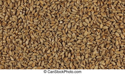 Slow rotation of the heap of wheat grains.