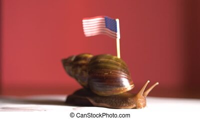 Slow snail with a America flag on her back at red background