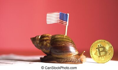 Slow snail with USA flag and crypto coin of Bitcoin slowly...