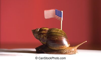 Slow snail with USA flag slowly moving to future - Slow...