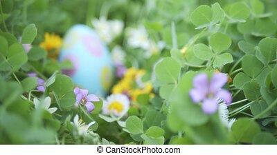 Slowly focusing on hidden Easter egg in garden full of flowers