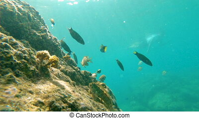 Slowmotion shot of a coral reef with beautiful tropical sea...