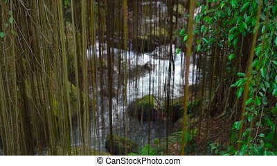 slowmotion shot of a river flowing in jungles. Area around...