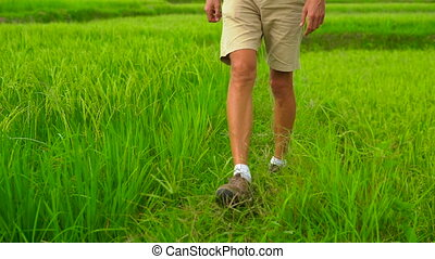 Slowmotion shot of a young man walking at the edge of a beautiful rice field