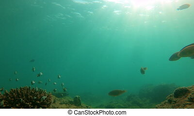 Slowmotion shot of coral reef with plenty of tropical fish.
