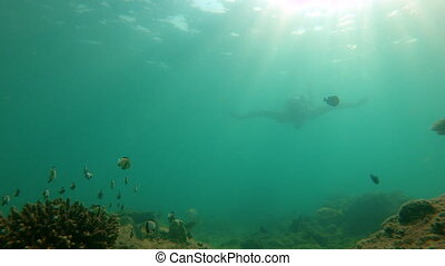 Slowmotion shot of man snorkeling in a tropical sea to see a...
