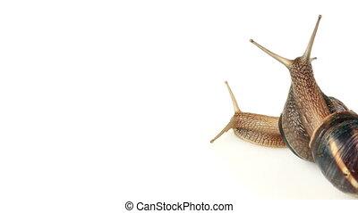 Slug time lapse - Snail Mating Time lapse