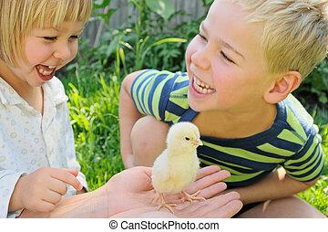 sluha, děvče, a, kuře