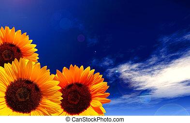 slunit se, květiny