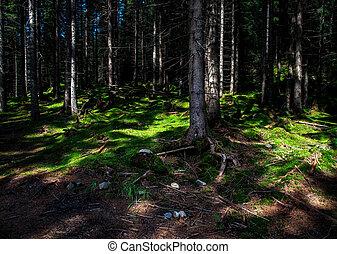 slunit se, nezkušený, ozdobit iniciálkami, mech, les
