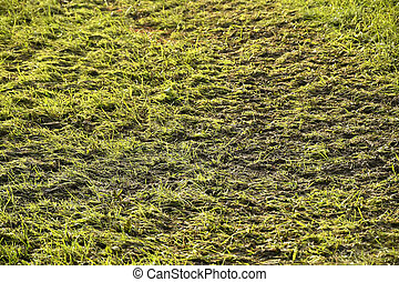 slurry on a green meadow in autumn