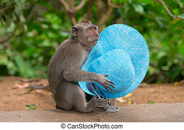 Sly monkey with stolen hat