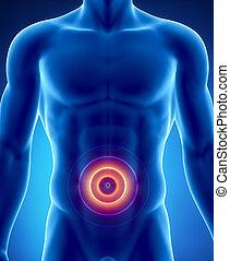smärta, in, abdominal orglar, begrepp