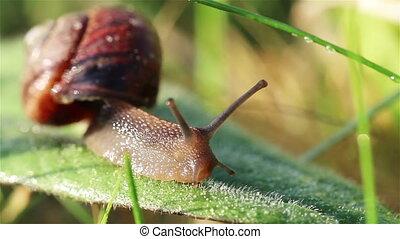 Smal snail glide on green leaf