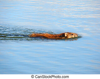 Small animal floating on water