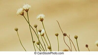 Small arid area wildflowers handheld shot