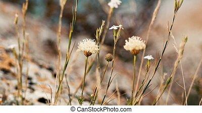 Small autumn wildflowers macro handheld shot in 4K