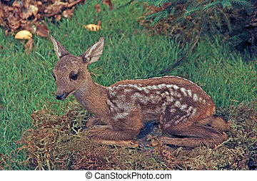 small baby deer fallow deer wild animals of the forest in the middle of the Woods