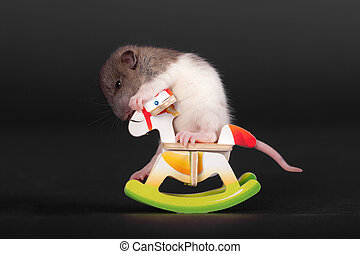 small baby rat