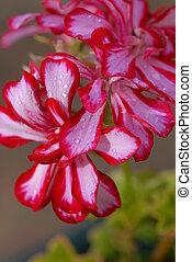 small beautiful flowers