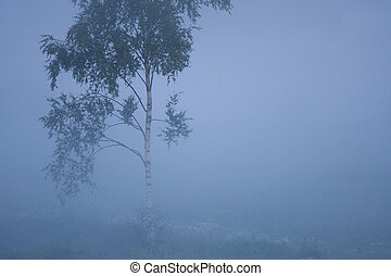 Small birch in thick fog at meadow