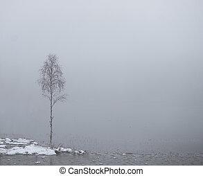 small birch tree by water in heavy fog