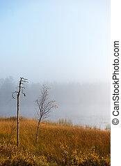 Small birch tree on foggy autumn morning