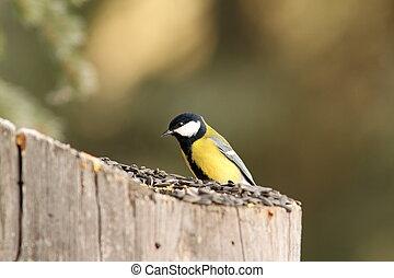 small bird at seed feeder