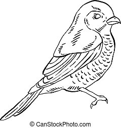 Small bird in black and white, vector illustration.