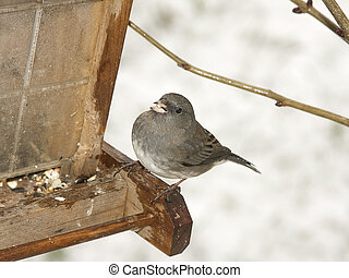 Small bird on feeder in winter