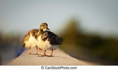 Small bird sitting on Seven Mile Bridge, Florida.