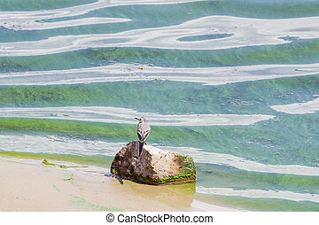 small bird stands on a stone on the bank of a green river