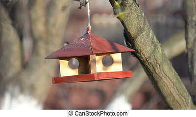 Small birds are feeding at a manger - Small titmice and...