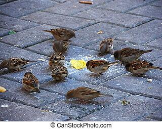 Small birds are feeding