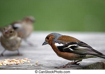 Small birds feeding on a table