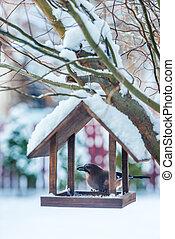 Small birds near feedbox