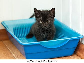 Small black kitten in plastic litter cat on floor - The...