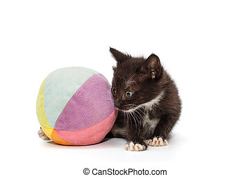Small black kitten playing with a ball
