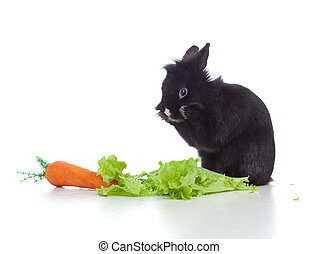 small black rabbit with carrot and lettuce sitting on floor