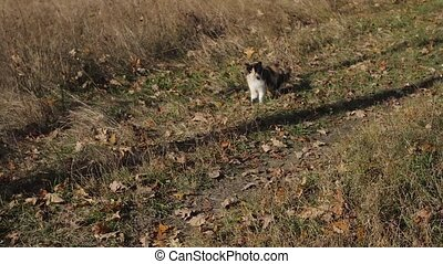 Small black-white kitten in the green gras with yellow...