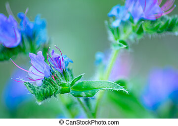 small blue bruise flower on a blurred background