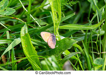 Small blue butterfly sit on green grass
